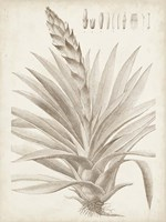 Sepia Exotic Plants III Framed Print