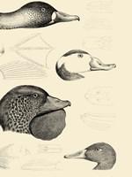 Waterbird Sketchbook IV Framed Print