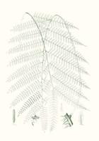 Verdure Ferns I Framed Print