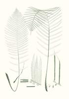 Verdure Ferns VII Framed Print