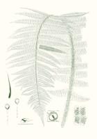 Verdure Ferns IX Framed Print