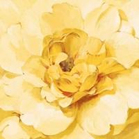 Yellow Peony Fine Art Print