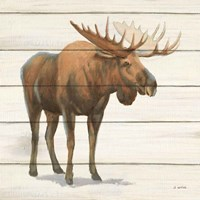Northern Wild VI Framed Print