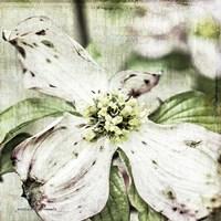Dogwood Floral Fine Art Print