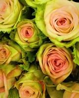 Green & Pink Rose Bouquet Fine Art Print