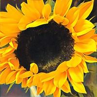 Sunshine on my Mind Fine Art Print