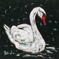 White Swan Fine Art Print