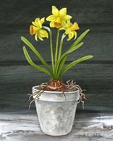 Farmhouse Garden I-Daffodils Framed Print