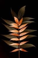 Fall Leaves 6 Framed Print