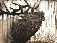 Bugling Bull Elk Fine Art Print