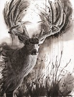 Paunsaugunt Prince Fine Art Print