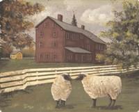 Hancock Sheep Fine Art Print
