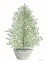 Cedar Tree in Pot Fine Art Print