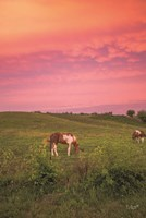 Horse at Sunset Fine Art Print