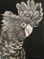 Gray Cockatoo Fine Art Print