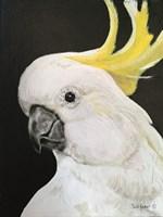 White Cockatoo Fine Art Print