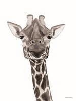 Safari Giraffe Peek-a-boo Framed Print
