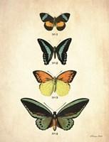 Butterflies 2 Framed Print