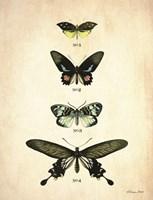 Butterflies 3 Framed Print