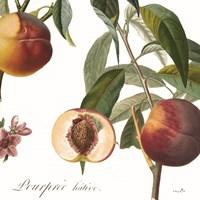 Peach Basket II Framed Print