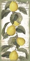 Citron I Framed Print