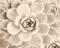 Cactus Cream II Framed Print
