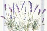 Floursack Lavender V Framed Print