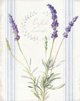 Floursack Lavender IV Framed Print