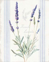 Floursack Lavender I Framed Print