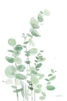 Eucalyptus I Framed Print