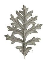 Histoire Naturelle Leaves II Framed Print
