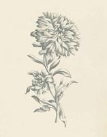 Eden Floral I Framed Print
