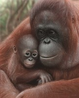 Orangutan Mother and Baby Fine Art Print