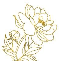 Gold Floral III Framed Print
