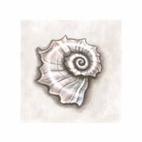 Shell I Framed Print