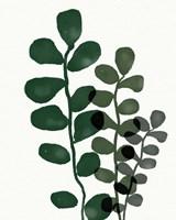 Green Eucalyptus I Framed Print