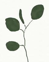 Green Eucalyptus II Framed Print