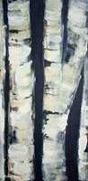 Birch Day Framed Print
