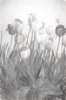 Tulips I Framed Print