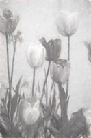 Tulips III Framed Print