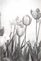 Tulips IV Framed Print