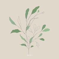 Wispy Leaf II Framed Print