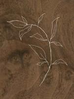 Wispy Wood I Framed Print