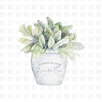 Garden Plants III Framed Print