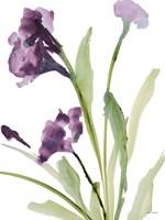 Purple Belles I Framed Print