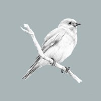 Bird Study on Blue I Framed Print