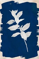 White Leaf on Navy II Framed Print