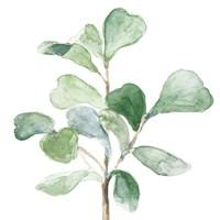 Fiddle Fig Leaf Plant I Framed Print