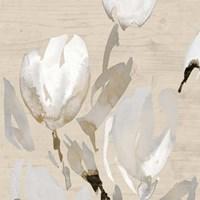 Neutral Tulips I Fine Art Print