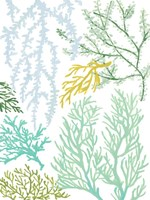 Budding Vertical Coral I Framed Print